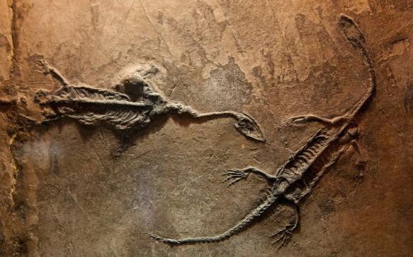 Pengertian Fosil, Syarat dan Proses Terbentuknya Fosil