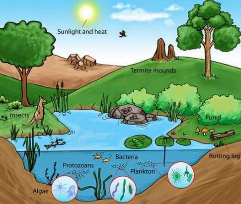 Pengertian Ekosistem dan Contohnya