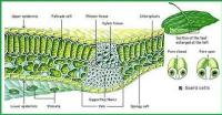Pengertian Jaringan dalam Biologi Lengkap