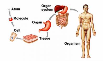Pengertian sel jaringan organ sistem organ sistem organ organisme