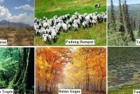 Pengertian Bioma, Ciri-Ciri, Fungsi, Jenis, dan Faktor yang Mempengaruhi Bioma